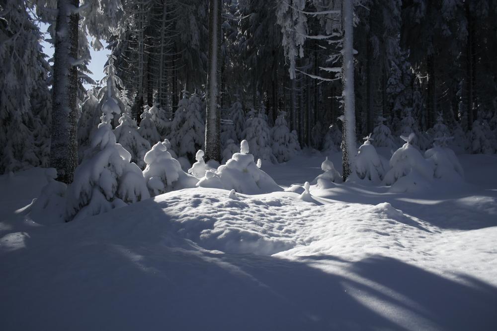 Napoleon +Winter