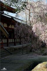 Nara II