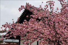 Nara IX Temple Horyu-ji (bouddhisme)