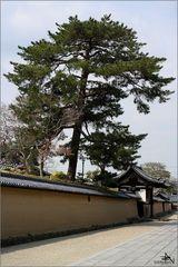 Nara V