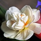 Narcisse double....