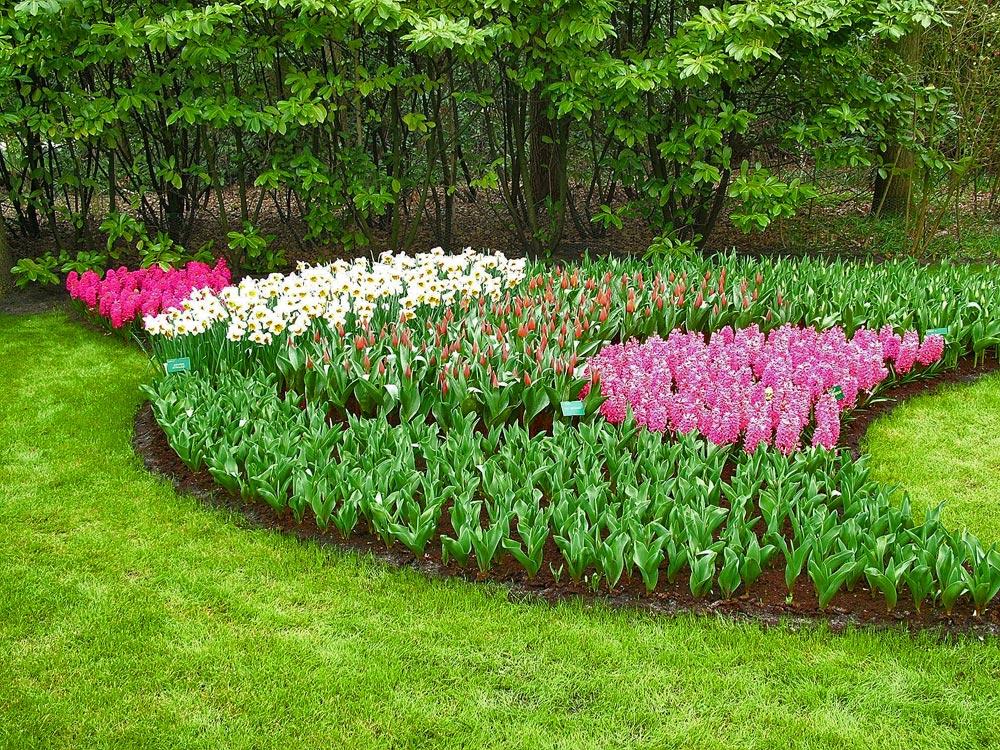 narzissen tulpen und hyazinthenblumen foto bild. Black Bedroom Furniture Sets. Home Design Ideas