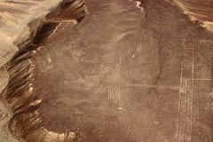 Nasca-Linien ----------- der Kolibri ist 96m lang und 66m breit.