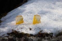 Naschies im Schnee