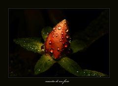 nascita di un fiore
