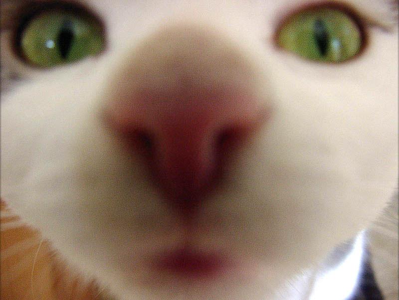 Nasenbär?