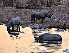 Nashörner beim Baden-Etosha Nationalpark