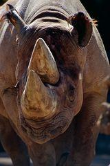 Nashorn, -2