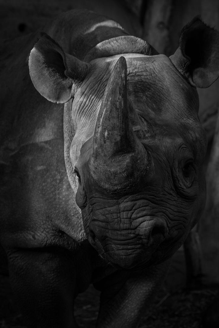 Nashorn 2