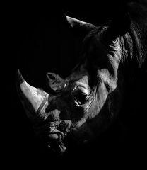 * Nashorn