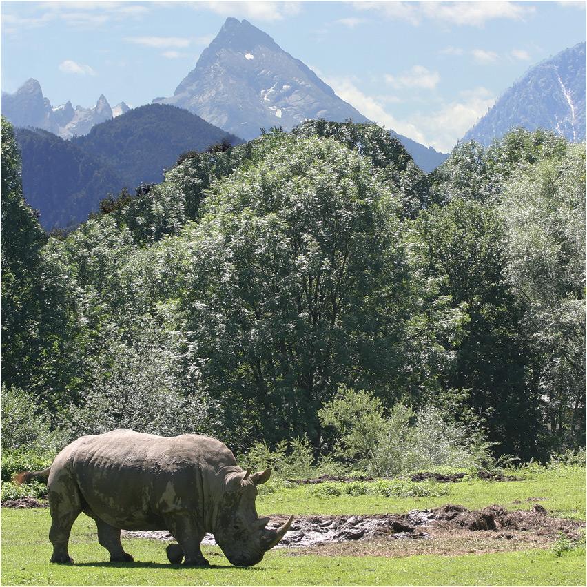 Nashorn am Kilimandscharo ?