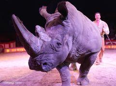 Nashorn Tsavo von Circus Krone