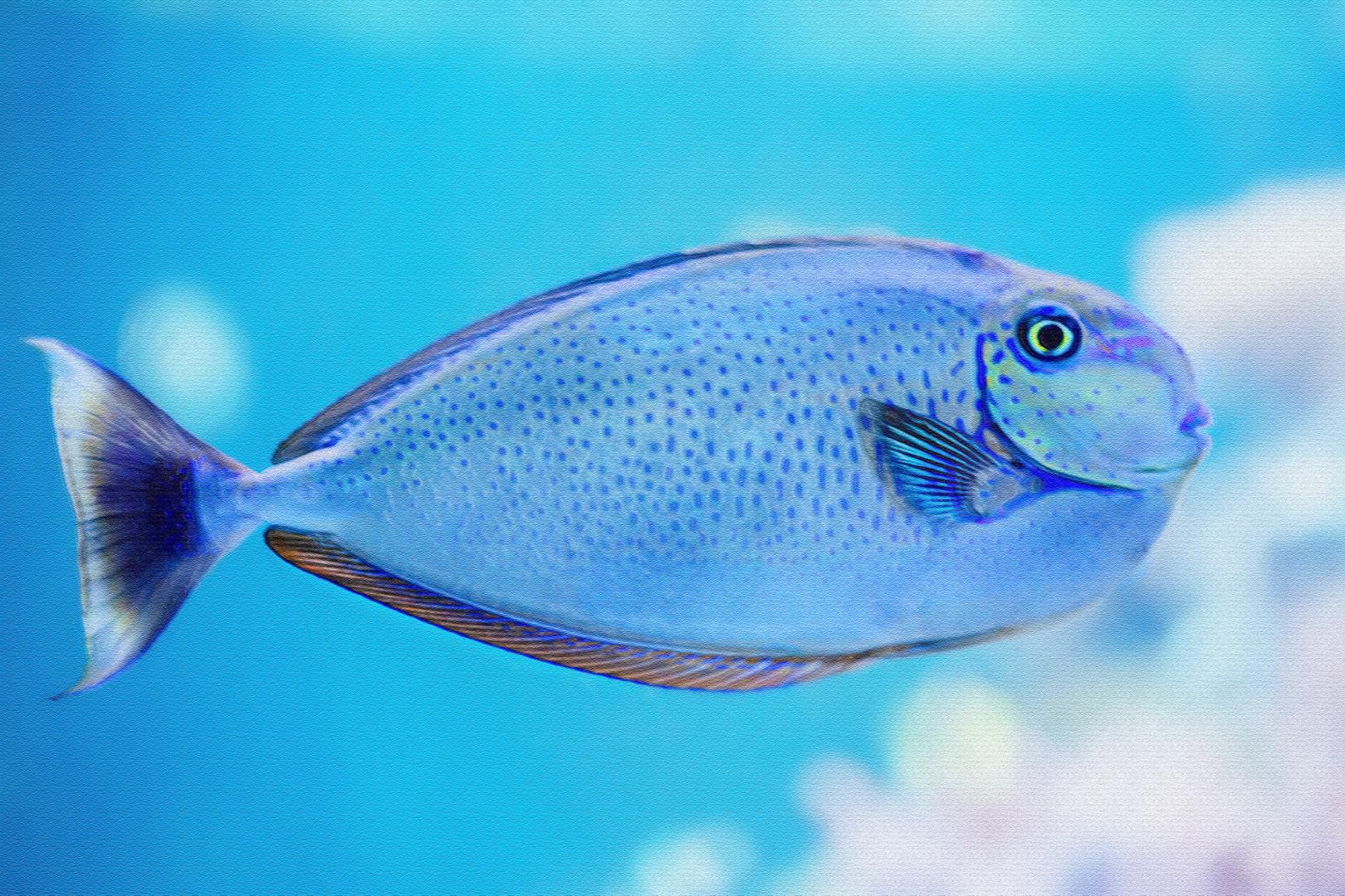 Naso Vlamingii Foto Bild Blau Digiart Aquarium Bilder Auf