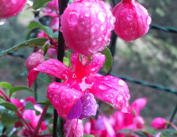 Nasse Blüte