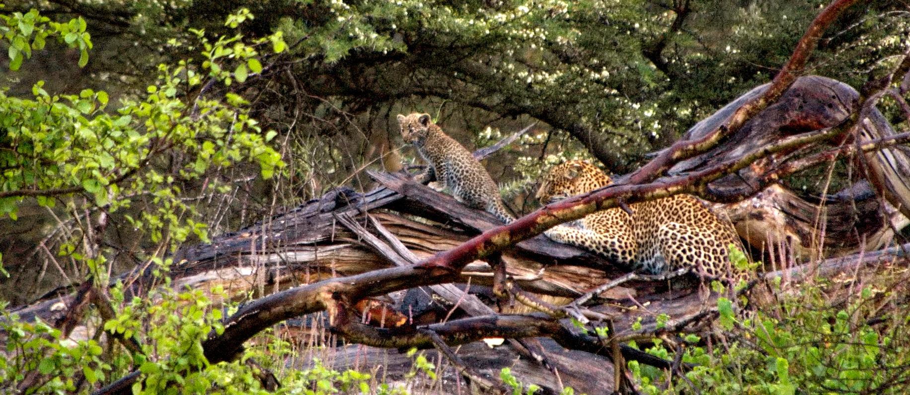 Nasse Leoparden : noch mal