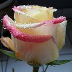 Nasse Schönheit