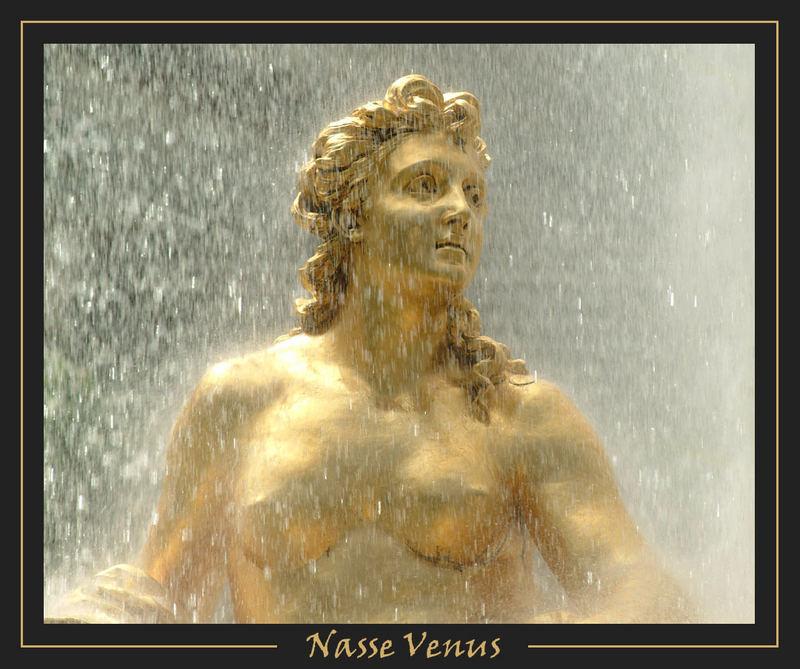 Nasse Venus