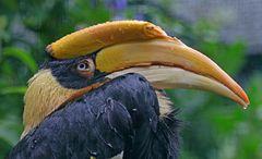 Nasser Hornvogel