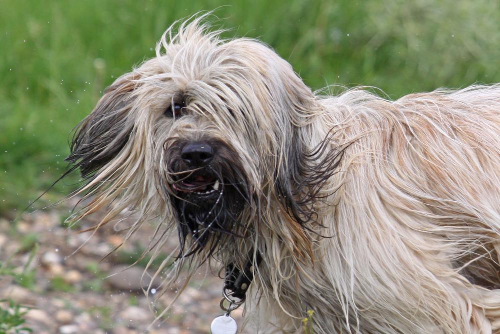 nasser Hund ;)