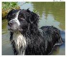 nasser Hund II