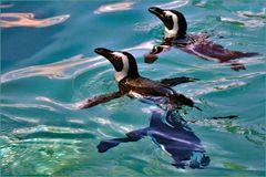natation synchronisée ....