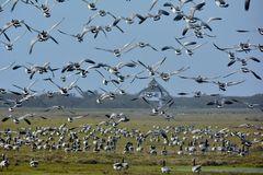 National-Park auf Hiddenssee