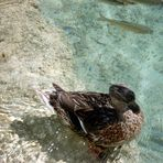 National Park Plitvice lakes  - Croatia