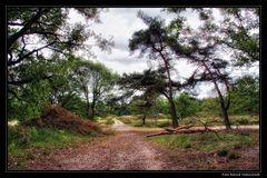 Nationalpark De Meinweg