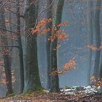 Nationalpark Eifel - Fototour - Buchenwald