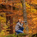 Nationalpark Eifel - Fototour im Herbst
