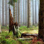 Nationalpark Eifel - Natur- und Landschaftsfotografie - Wald