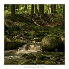 """Nationalpark Harz """" so schön und Wild ist unser Harzer Land ....."""""""