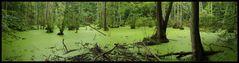 Nationalpark Jasmund: Kleiner Waldsee