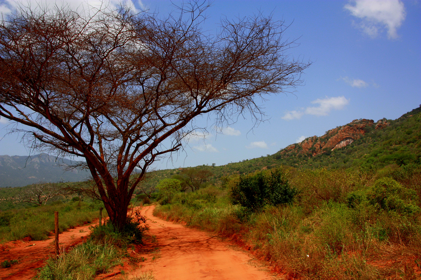 Nationalpark Tsavo-West in Kenia
