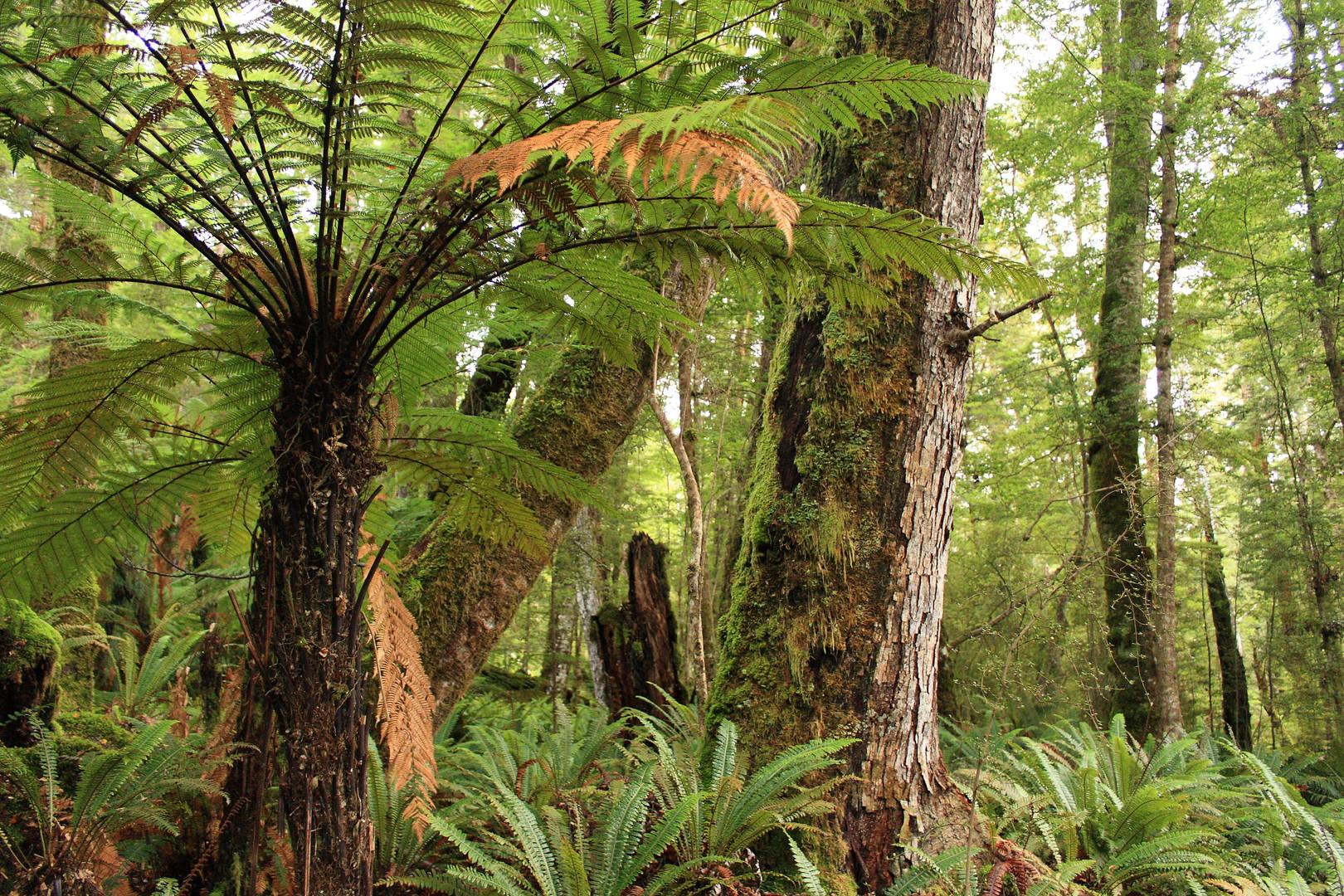 Native Rain Forest