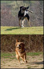 >>natürlich kann der mensch ohne hunde leben...