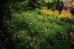 natürliche Gärten , so schön.....