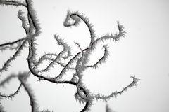 Natürliche Linien im Frost 3
