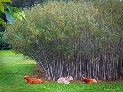 Natürliches Regendach für das liebe Vieh