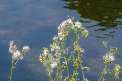 Natur am Ufer