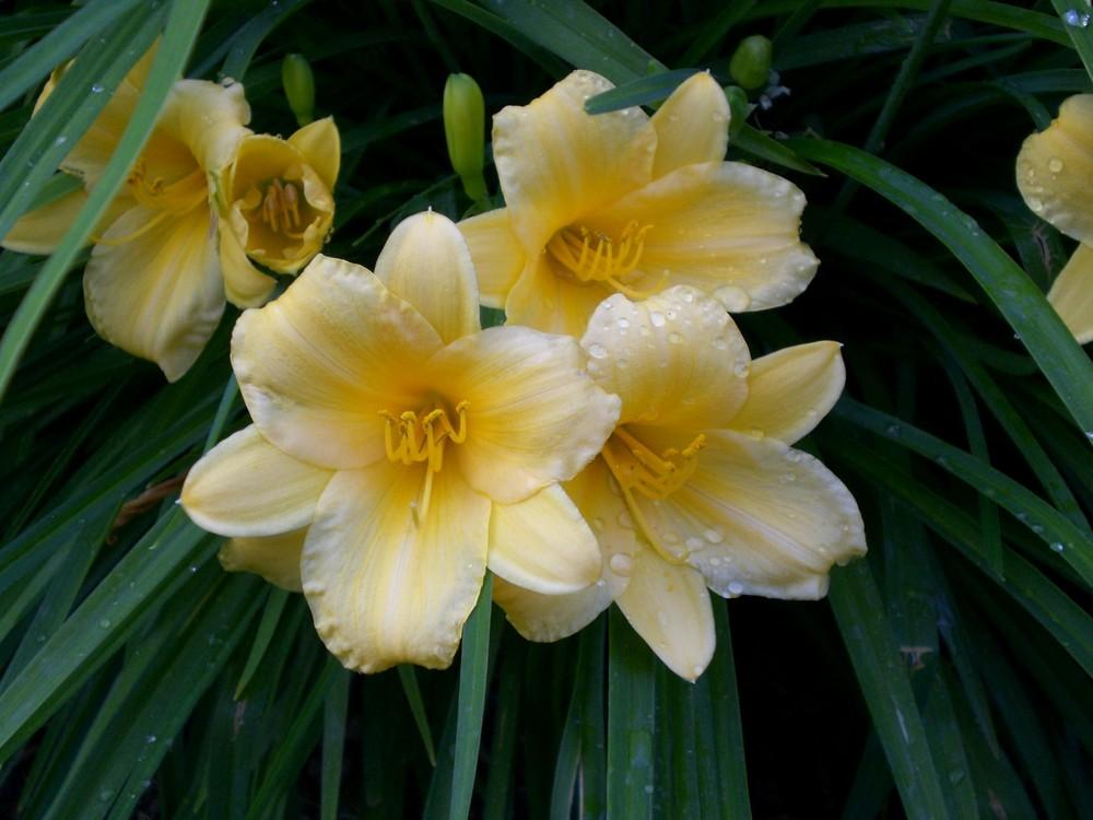 Natur-Blumen 12