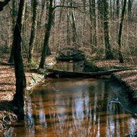 Natur Fotograf f60