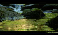 *Natur im Detail*
