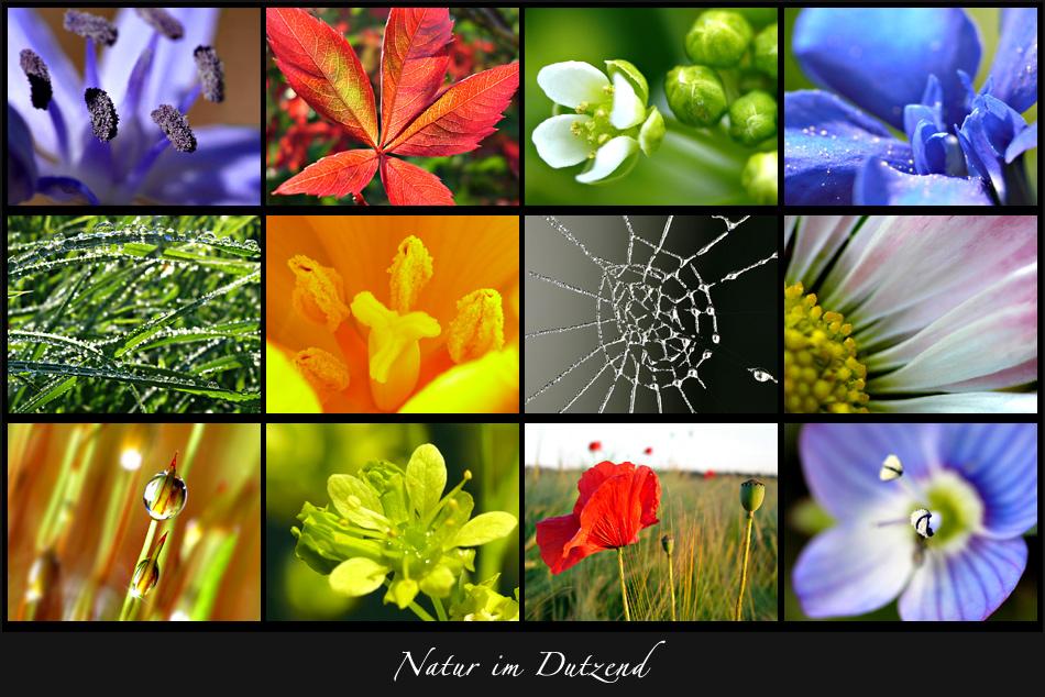 Natur im Dutzend