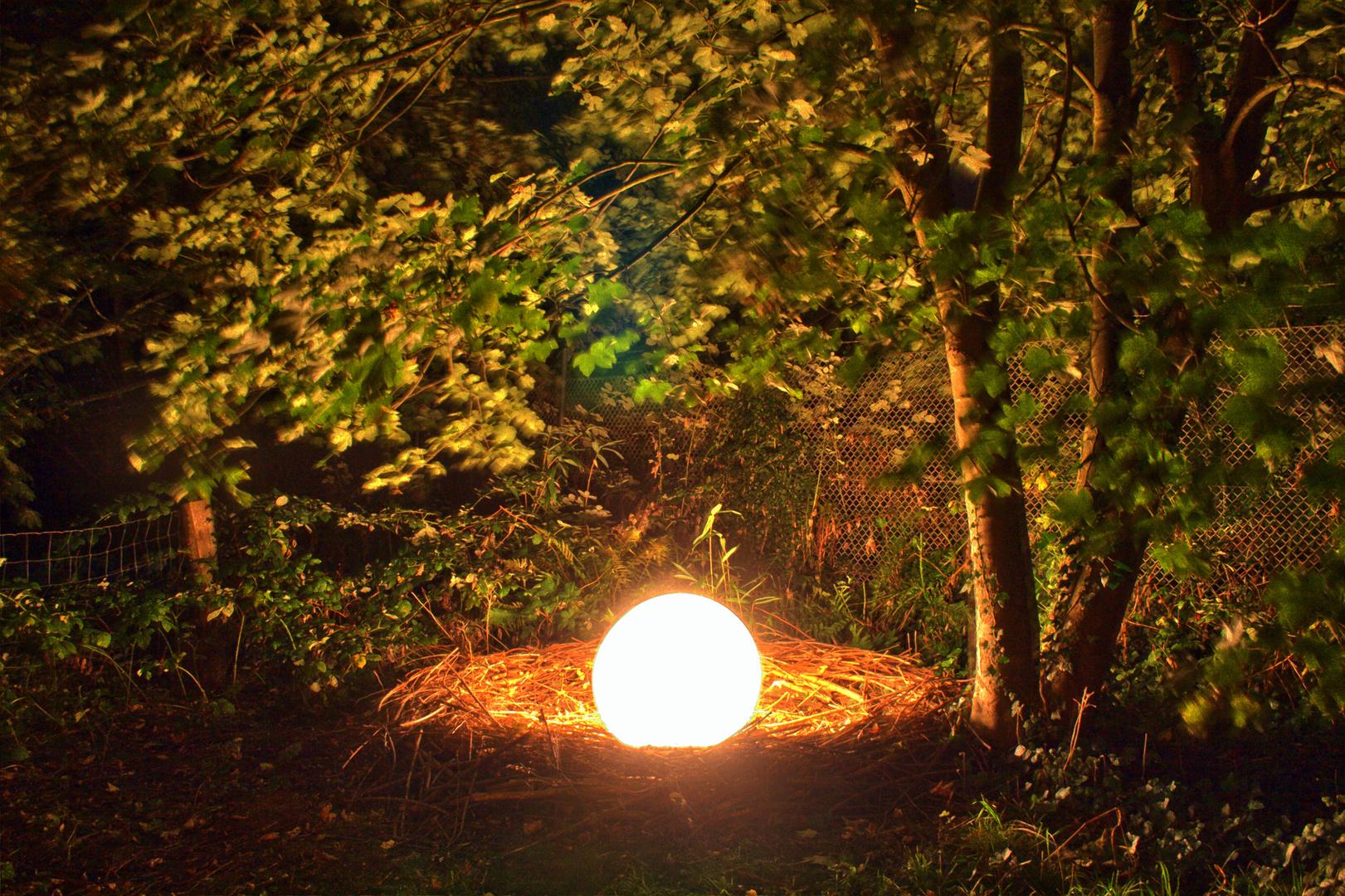 Natur im Licht