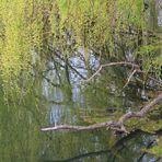 Natur Impression Frühling
