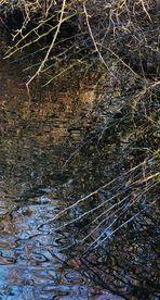 Natur Impressionen am Fluss