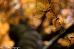Natur in Gold