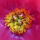 Natur in voller Blüte 6