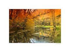 Natur + Landschaft - goldener Herbst -